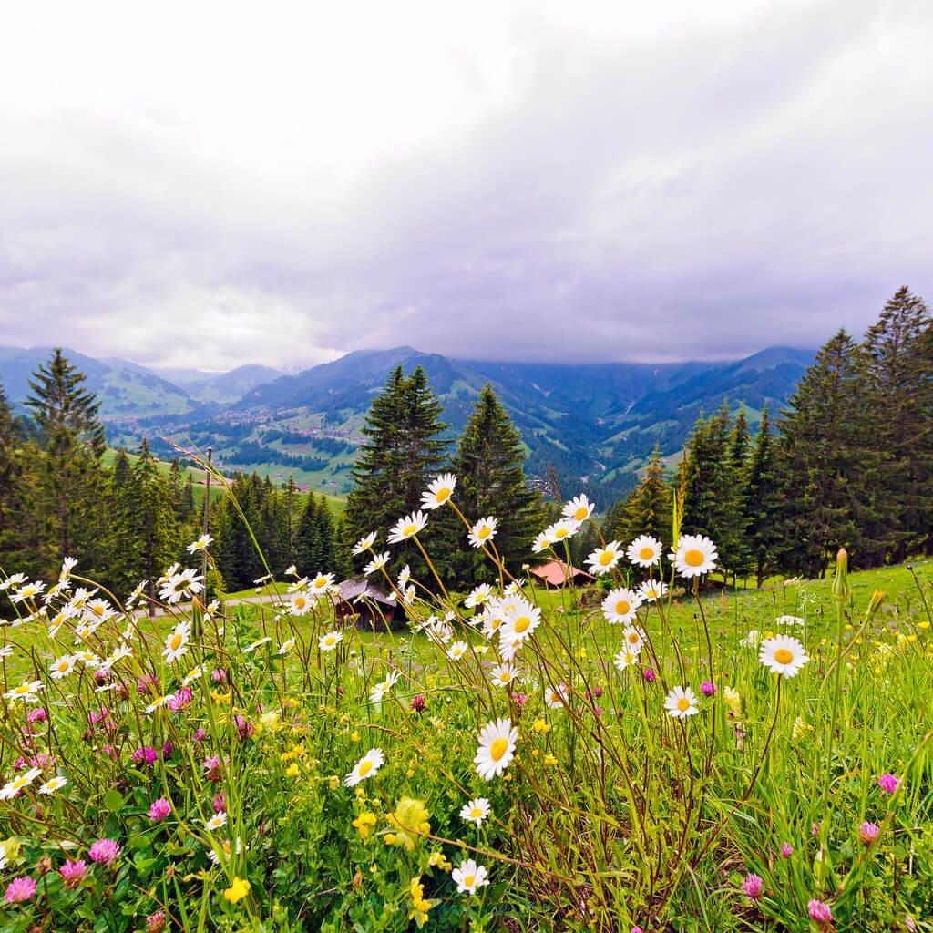 Преимущества отдыха в Белокурихе